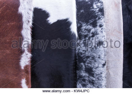 Variety of cowhide rugs - Stock Image