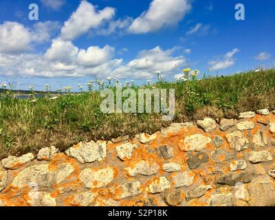 Landscape with stone wall in Canada during summer - Stock Image