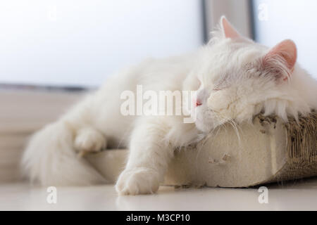 A chilled out cat is taking a nap on his favourite spot by the window, catching some sun rays and peacefully resting... - Stock Image