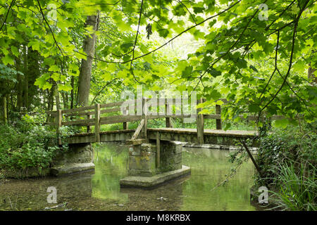 Wooden footbridge over stream in woodland, Lathkill Dale, Peak District, Derbyshire - Stock Image