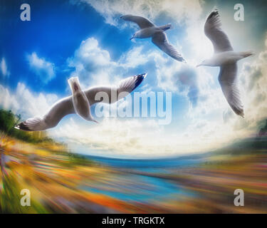 PHOTOGRAPHIC ART: Flying High (Torbay, Devonshire, Great Britain) - Stock Image