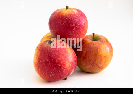 Ripe English eating apples Malus domestica WINTER WONDER ready for eating mid-winter in UK - Stock Image