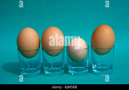 Hen s eggs of different size Symbolic Not all are born equal Or Some are much smaller than the crowd - Stock Image