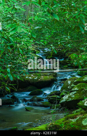 Greenbrier Area in the Great Smoky Mountains National Park ,TN - Stock Image
