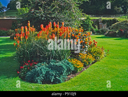 Kniphofia caulescens in a summer flower border in a country garden - Stock Image