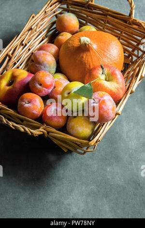 Freshly picked plums Mirabelles red yellow green apples orange pumpkin in wicker basket on black grey stone background. Thanksgiving autumn fall harve - Stock Image