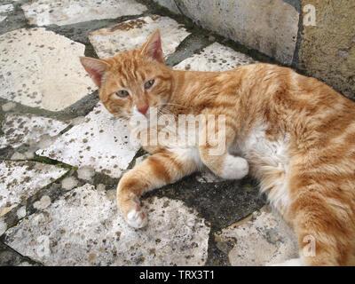 Beautiful ginger tomcat in Corfu, Greece - Stock Image