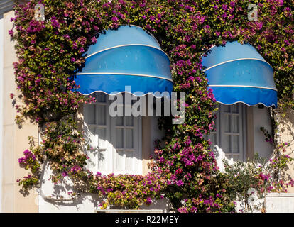 Two Windowqs With Blue Sunshades Framed With Flowering Bougainvillea Vine Plant - Stock Image