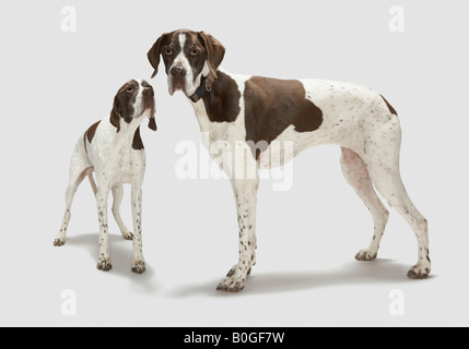 Portrait of two dogs - Stock Image