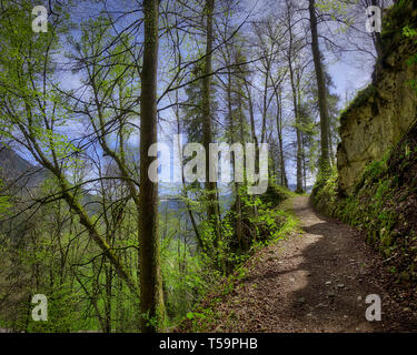 DE - BAVARIA: The path to the historic ruins of Hohenburg near Lenggries  (HDR-Image) - Stock Image
