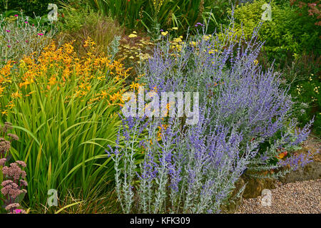 Garden flower border with Perovskia, Crocosmia and Verbascum making a colourful display - Stock Image