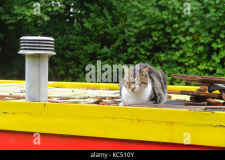 Cat sleeping on the roof of a narrowboat on the Oxford Canal near Jericho, Oxford - Stock Image