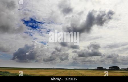 Farm land alongside the North Norfolk coastal path at Burnham Deepdale. - Stock Image
