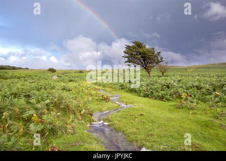 Rainbow over Prewley Moor Dartmoor National Park Devon Uk - Stock Image
