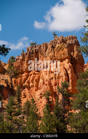 USA Utah, Red Canyon in Dixie National Forest near Zion National Park. - Stock Image