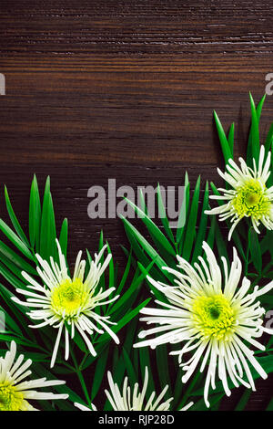 White Chrysanthemums and Foliage with Space for Copy - Stock Image