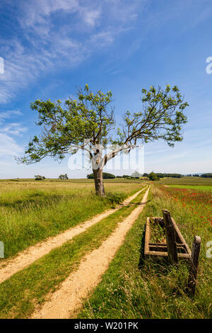 The track leading to the Farm by the old water trough - Stock Image
