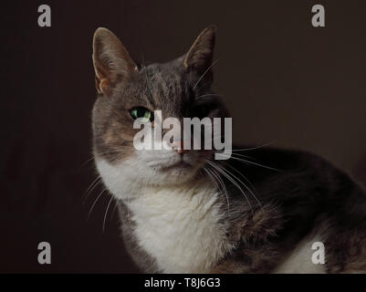 close up of domestic cat  Eccles-on-Sea, Norfolk, UK       January - Stock Image