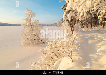 Landscape in winter season, nice warm afternoon light,  snowy trees,  mountain in background, Gällivare county, Swedish Lapland, Sweden - Stock Image