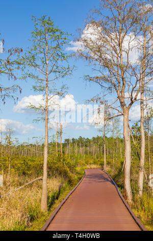 Okefenokee Swamp Folkston, GA, USA-3/30/19: A walkway through the eastern side of the Okefenokee swamp. - Stock Image