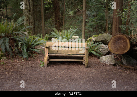 Rustic wooden bench in forest, Lighthouse Park, West Vancouver, British Columbia, Canada - Stock Image