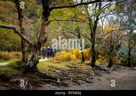 walking by the Lake shore at Glendalough county Wicklow - Stock Image