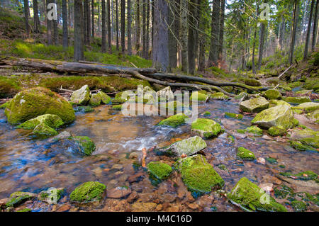 nature - Stock Image