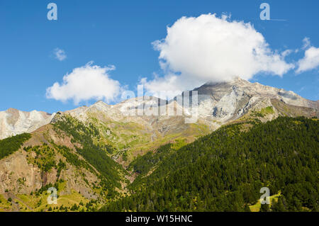 Pinar del Clot mountain pine forest (Pinus mugo) with Posets massif at the background (Viadós, Chistau valley, Sobrarbe,Huesca, Pyrenees,Aragon,Spain) - Stock Image