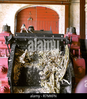 A man is just visible feeding sugar cane into a crusher - Stock Image