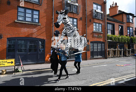 Brighton UK 4th May 2019 - A huge zebra puppet on its way to take part in the annual Brighton Festival Children's Parade through the city which has the theme 'Folk Tales from Around the World' . Organised by the Same Sky arts group the parade traditionally kicks off the 3 week arts festival with this years guest director being the singer songwriter Rokia Traore . Credit : Simon Dack / Alamy Live News - Stock Image