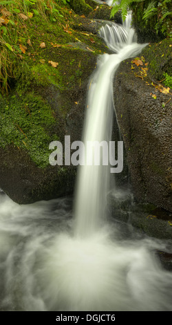Upper Colly Brook, on an autumn afternoon. In Dartmoor National Park - Stock Image