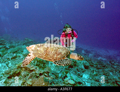 underwater, turtle and diver - Stock Image