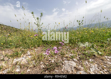 Vista near Vjosa river Albania - Stock Image
