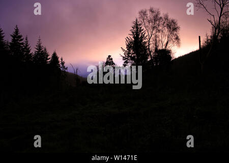 Picture of dark trees silhouettes against beautiful colorful sky. - Stock Image