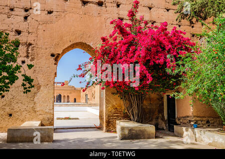 Red flowers in front of the gate in the Medina of Marrakech, Morocco - Stock Image