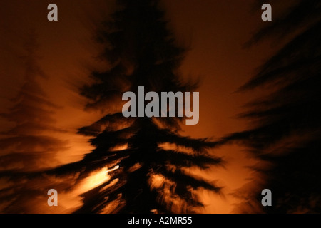 A streetlight illuminates some trees in the foggy night. - Stock Image