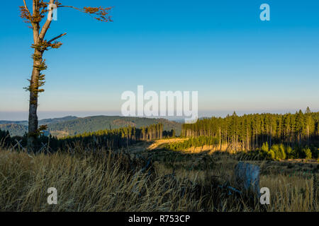 View of autumn mountain landscape. Sunset. Sunny natural scenery, solitary tree, grass, forest and mist on horizon. Hiking in tranquil evening nature. - Stock Image