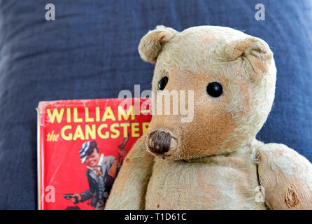 German Ted, very elderly much loved and worn German vintage teddy bear, c. 1914 showing a fine pointed face profile with William the Gangster book by Richmal Cromp - Stock Image