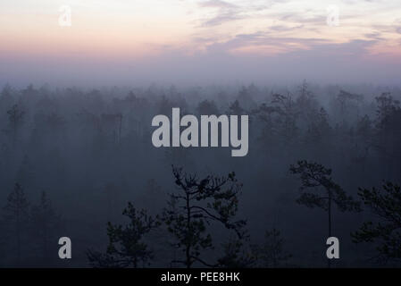 Laeva bog at night. Alam-Pedja Nature Reserve, Estonia - Stock Image
