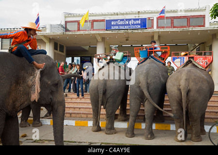 Thailand, Surin, Surin. Elephant taxis await passengers at the Surin Railway station during the annual Elephant - Stock Image