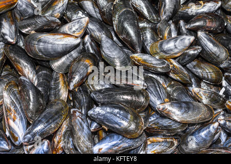 Fresh mussels on market stall - France. - Stock Image