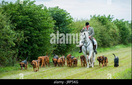 Cranwell, Lincoln, Lincolnshire, UK.  6th August 2017.  The Cranwell Bloodhounds first ride out and hound exercise of the season attracted over fifty supports and followers, the majority riding on a Sunday summer's afternoon.  The Hunt Master Mr Phil Broughton MH can be seen leading the hounds and blowing his hunting horn 'for home' as they near the hunt kennels.  Credit:  Matt Limb OBE/Alamy Live News - Stock Image