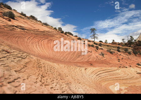 Sedimentary sandstone patterns, Zion National Park, Utah, USA - Stock Image