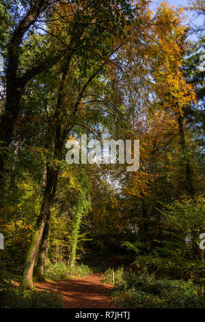 Trees in autumn colours at Betws-y-Coed, Snowdonia National Park, North Wales - Stock Image