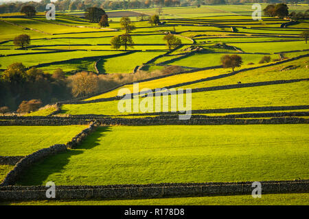 Small fields separated by dry stone walls are a feature of the landscape in the Peak District. - Stock Image