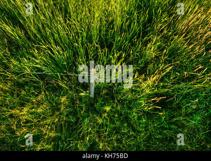Pole aerial high dynamic range (HDR) image of a wooden fence post and barbed wire surrounded by tall grass. - Stock Image