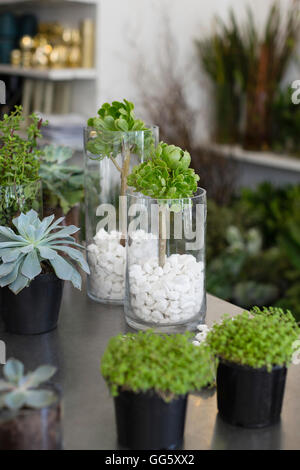 Potted plants for sale in flower shop - Stock Image