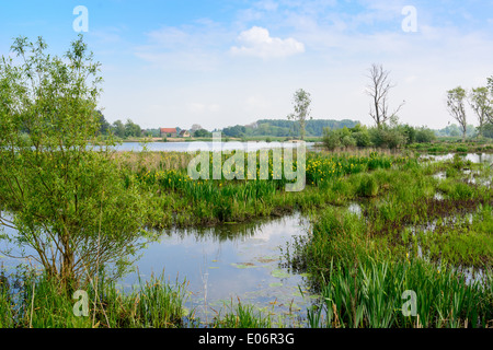 Nature reserve Bourgoyen in Ghent, Belgium - Stock Image
