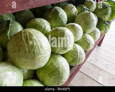 Cabbages at a farm market: A bin full of large green cabbage at a farm market in the county. - Stock Image