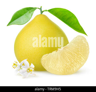 Isolated pomelo citrus fruit. One whole pomelo and a peeled segment with leaves and flowers isolated on white background with clipping path - Stock Image